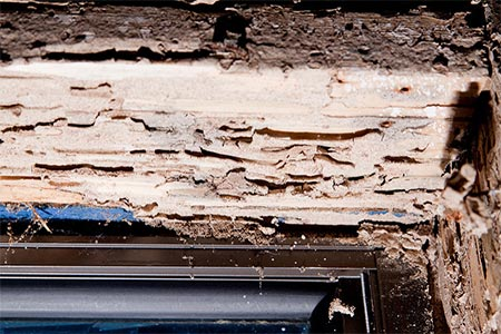 damage from termites