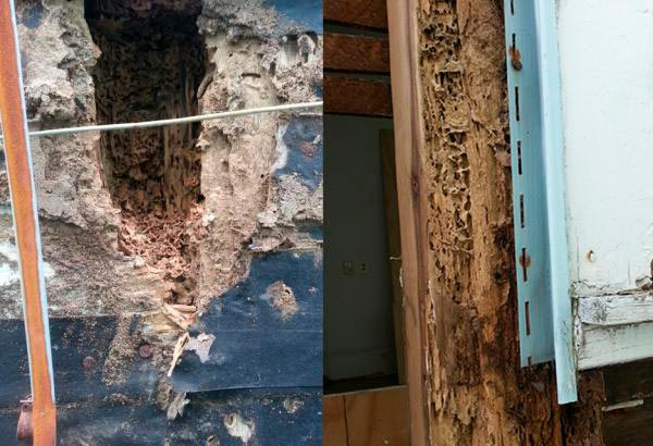 formosan termite damage