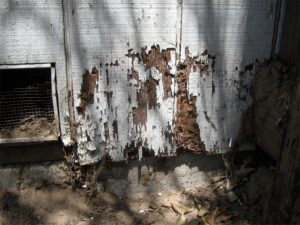 foundation termite damage