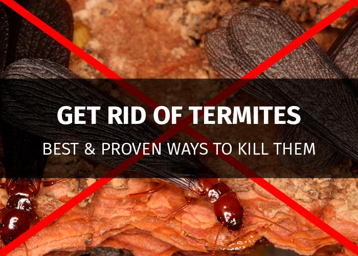 How To Get Rid Of Termites 13 Proven Methods To Kill Pests 2019