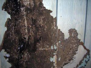 termite damage paneling