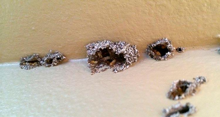 termite holes in drywall