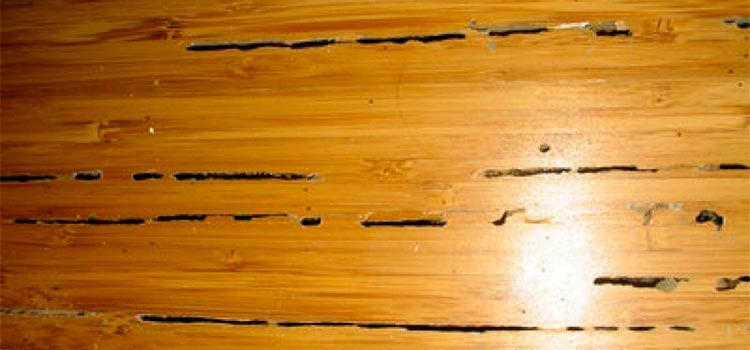 termite holes in floor