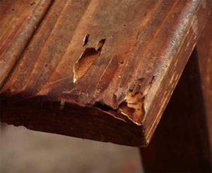 termite holes in furniture