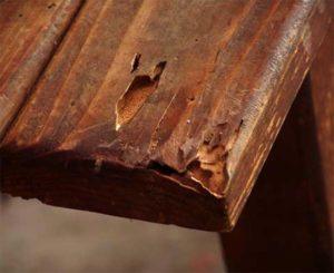 termite holes in furniture