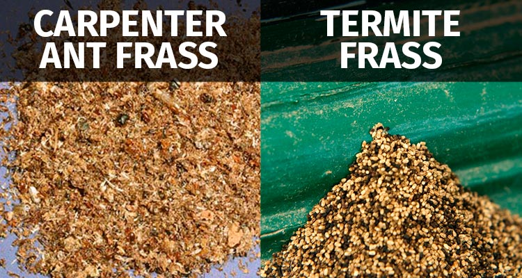 Carpenter Ant Frass vs Termite Frass Difference