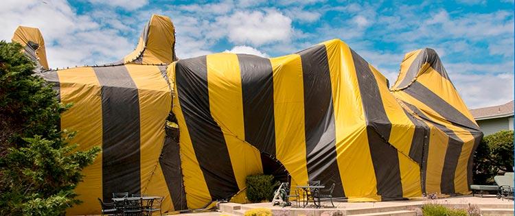 home termite tenting picture