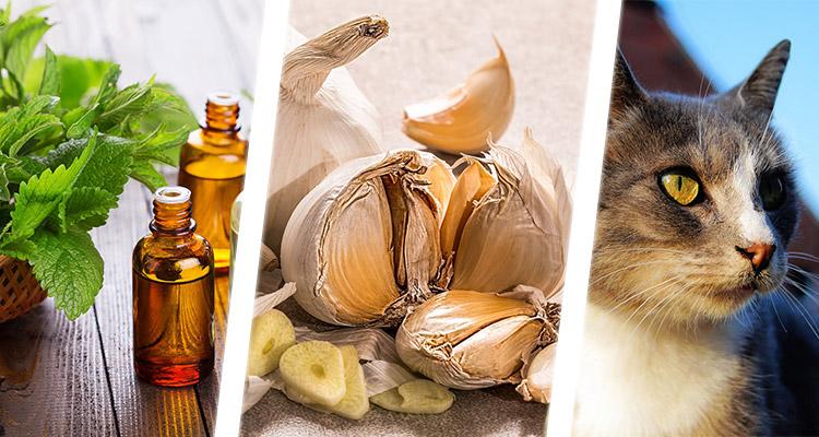 natural mice repellents
