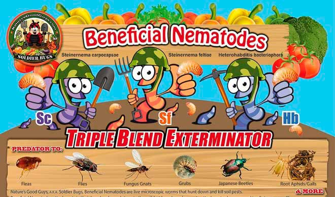 nematodes against termites