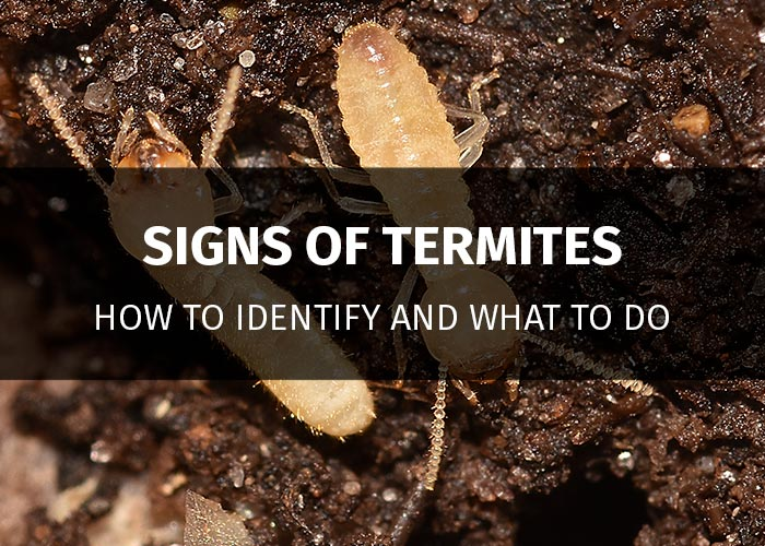 signs of termites