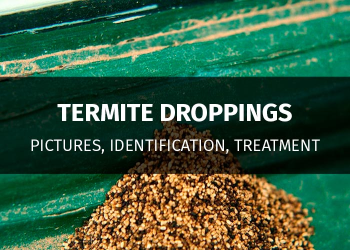 Termite Droppings Frass What Do They Look Like With