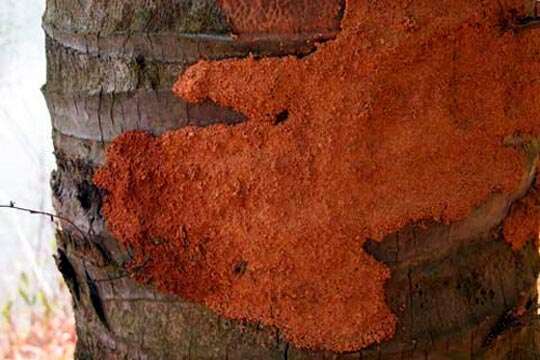 termite mud coverings