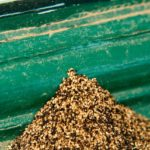 termite pellets image