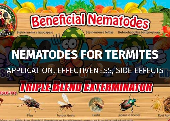 beneficial nematodes against termites