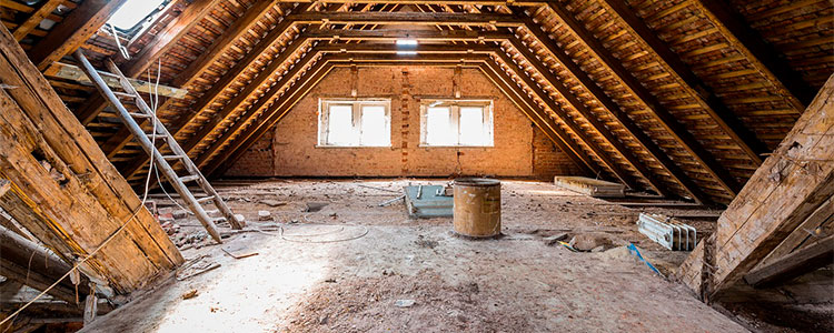 keep your attic clean to prevent mice infestation