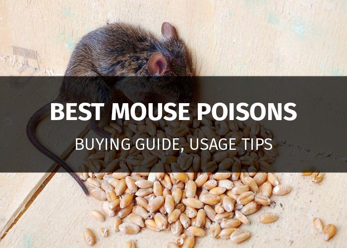 best mouse poisons featured