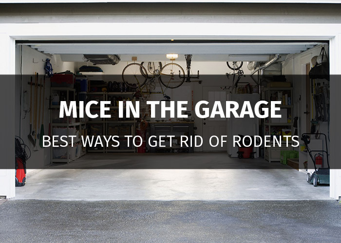 5 Best Ways To Get Rid Of Mice In The Garage Without Chemicals