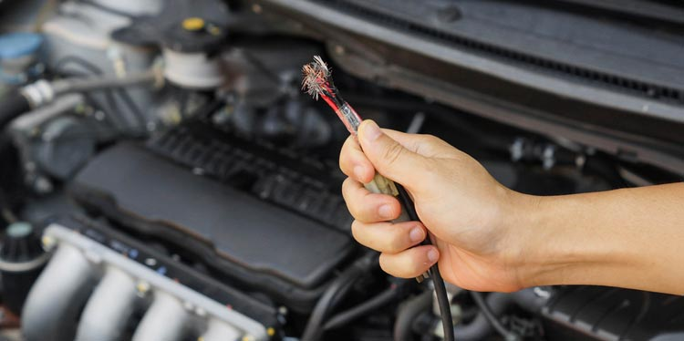 mouse chewing wires in your car