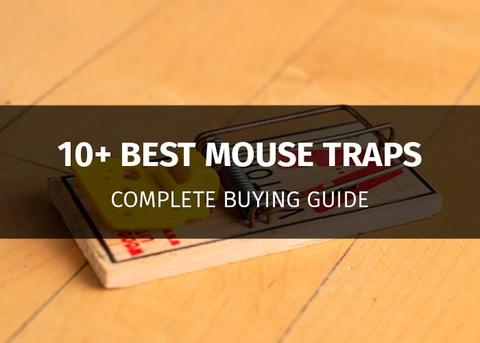 mouse traps featured