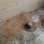 termite droppings picture