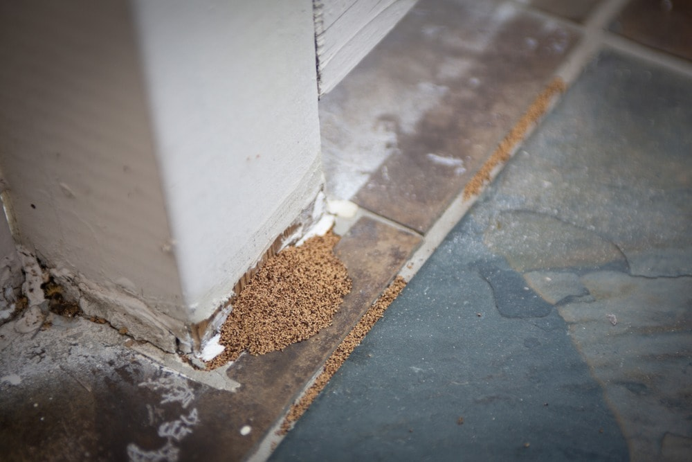 Termite droppings are a solid sign of infestation in your property.